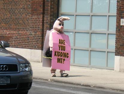 Are You Kidding Me Bunny Small