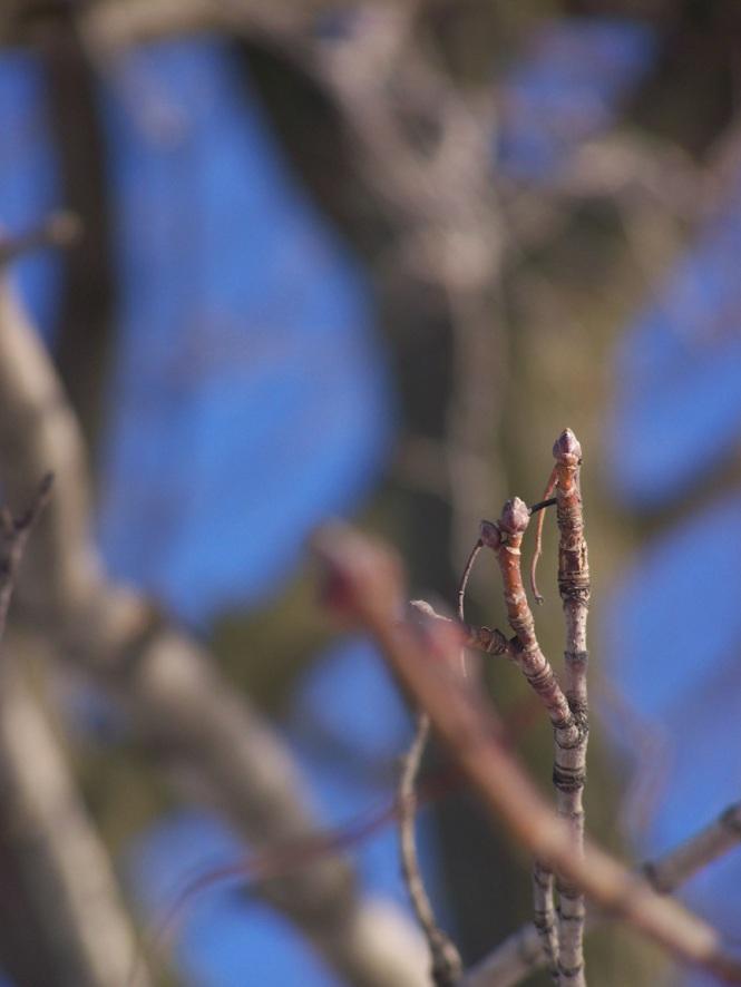 Dead Branches 2