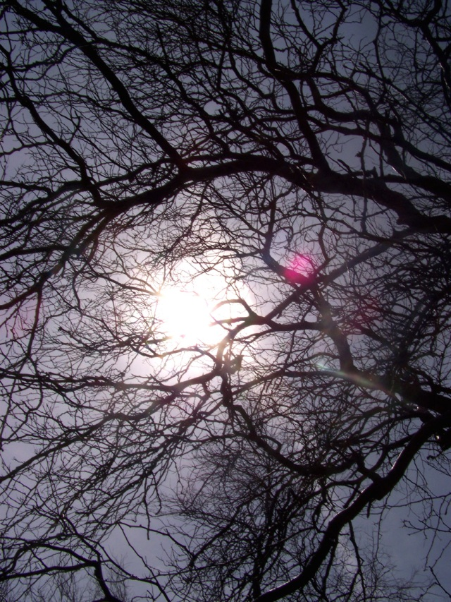 Sunlit Branches