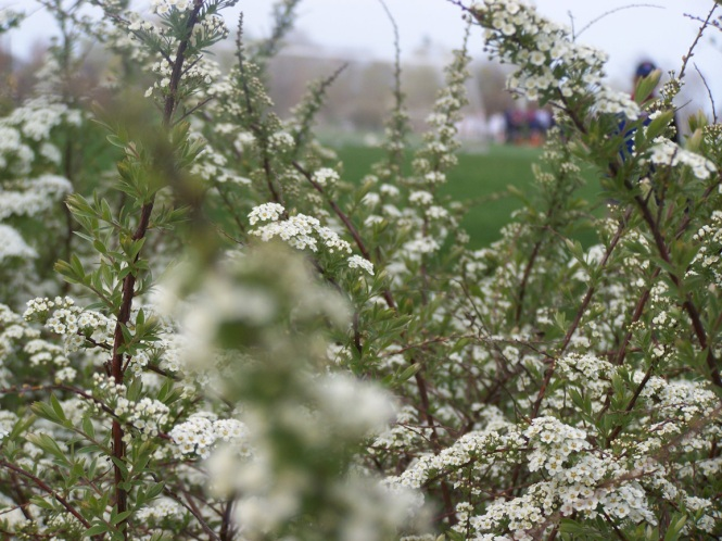 White Flowers 2