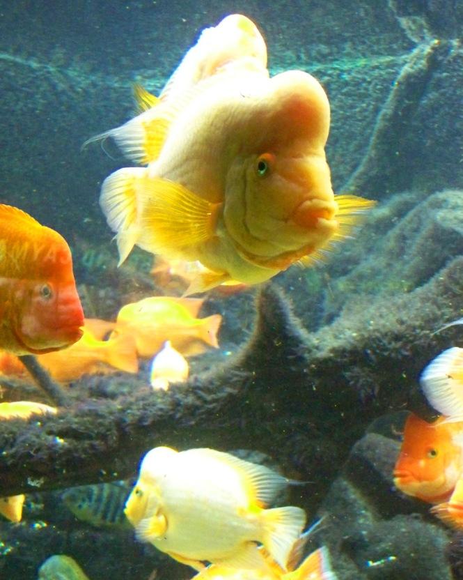 Bulbous Fish