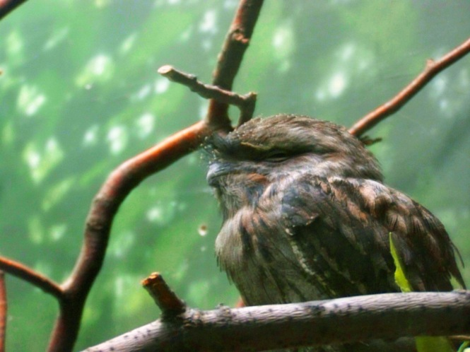 Prickly Bird