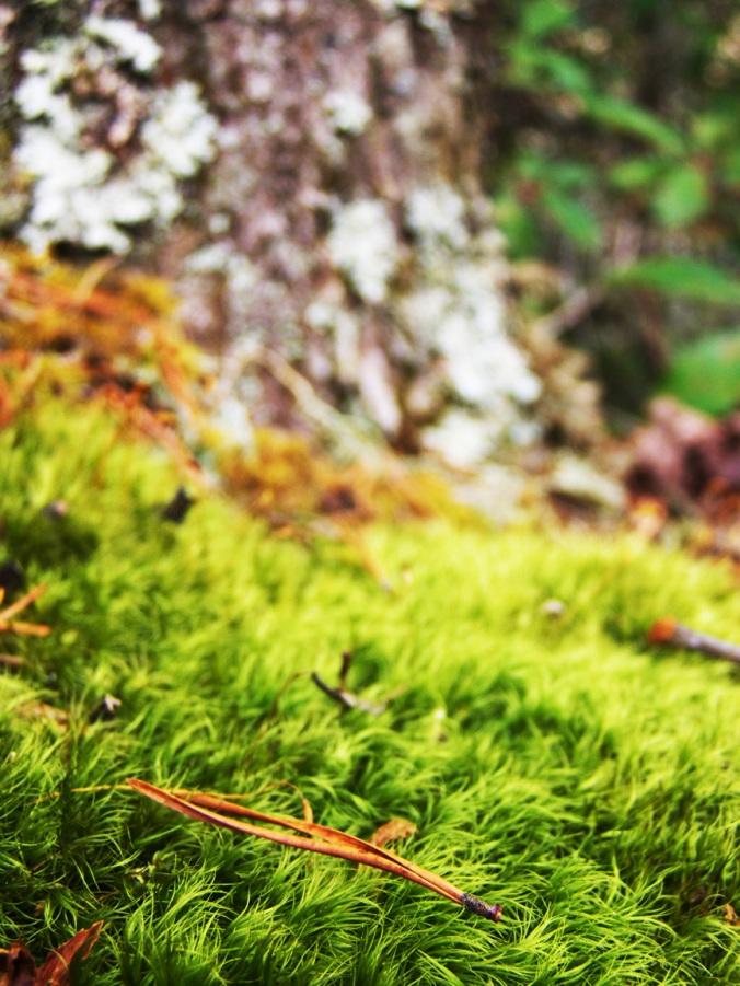 Moss 2