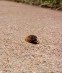 Cicada Walk