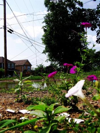 Flower Pond 2