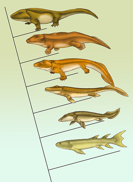 Evolution of Fish