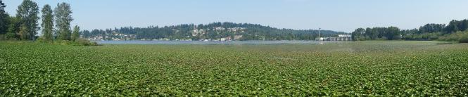 Wetlands Pana