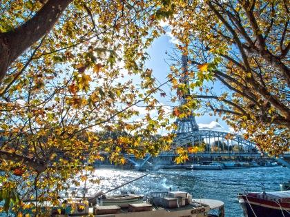 Eiffel Through the Leaves